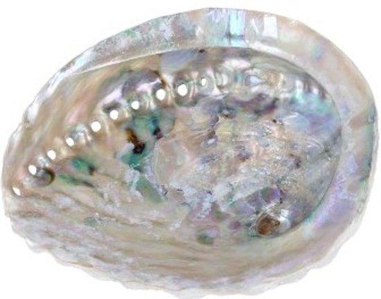 Abalone Smudge Schelp - Parelmoer (13-15 cm)