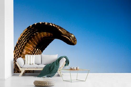 Fotobehang vinyl - Cobra slang met een blauwe hemel breedte 385 cm x hoogte 240 cm - Foto print op behang (in 7 formaten beschikbaar)