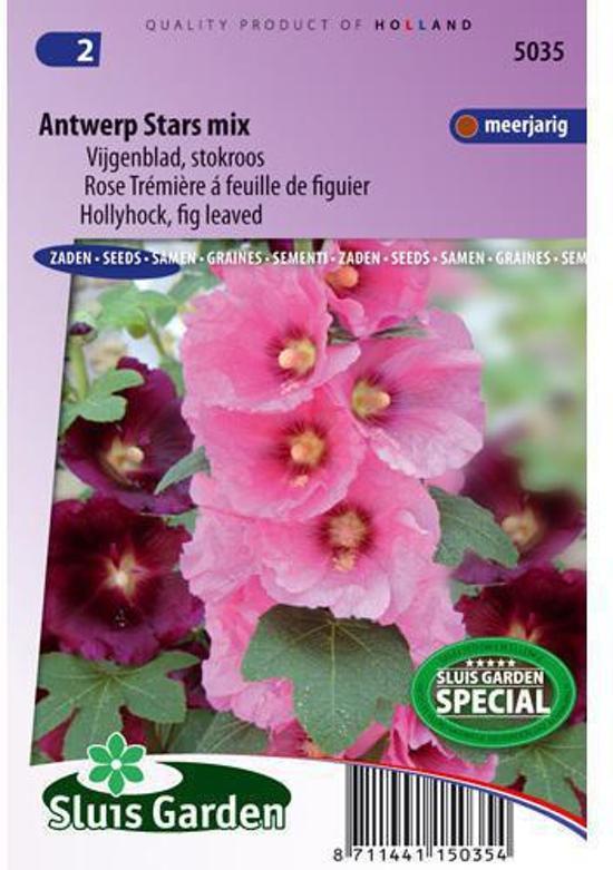 Sluis Garden Stokroos Antwerp Stars Enkelbloemig Mix (alcea)