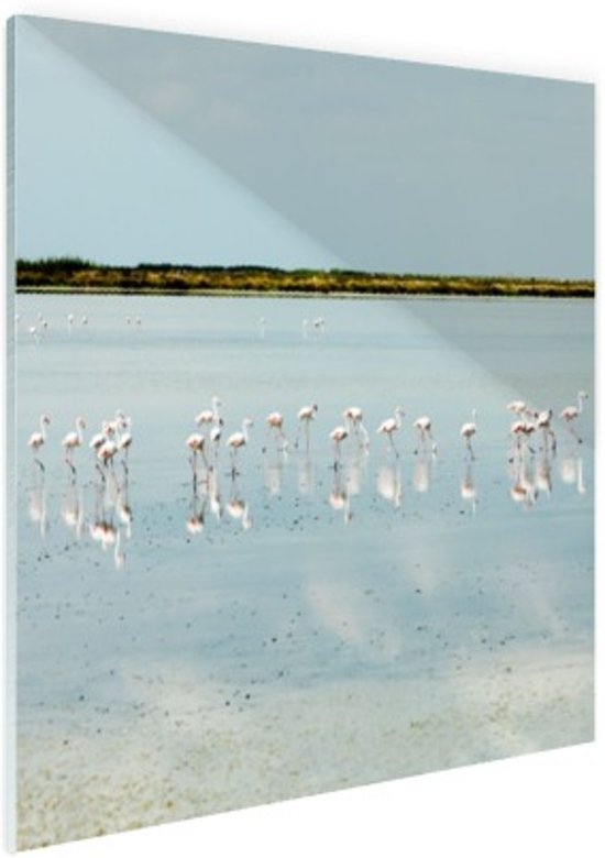 Moderne foto met flamingos Glas 50x50 cm - Foto print op Glas (Plexiglas wanddecoratie)