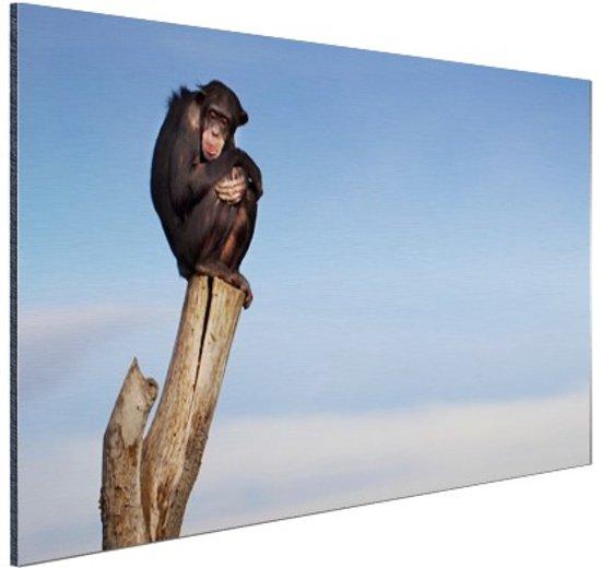 Chimpansee op boomstam Aluminium 120x80 cm - Foto print op Aluminium (metaal wanddecoratie)