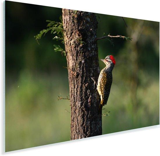 Grondspecht in Lake Mburo National park Plexiglas 90x60 cm - Foto print op Glas (Plexiglas wanddecoratie)
