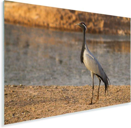 Jufferkraanvogel aan het water Plexiglas 90x60 cm - Foto print op Glas (Plexiglas wanddecoratie)