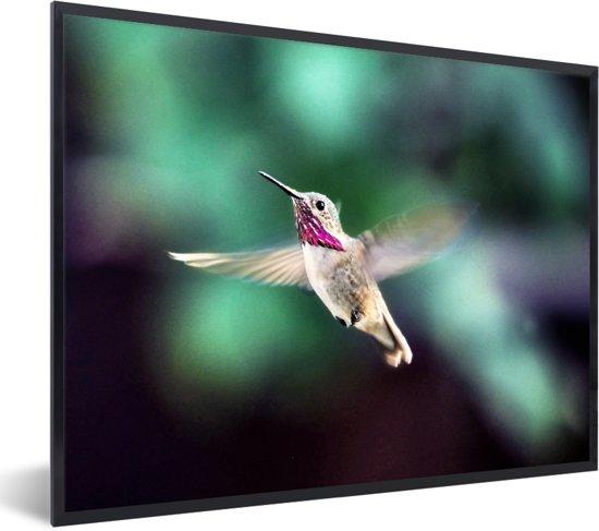 Foto in lijst - Een calliope kolibrie met gespreide vleugels fotolijst zwart 40x30 cm - Poster in lijst (Wanddecoratie woonkamer / slaapkamer)