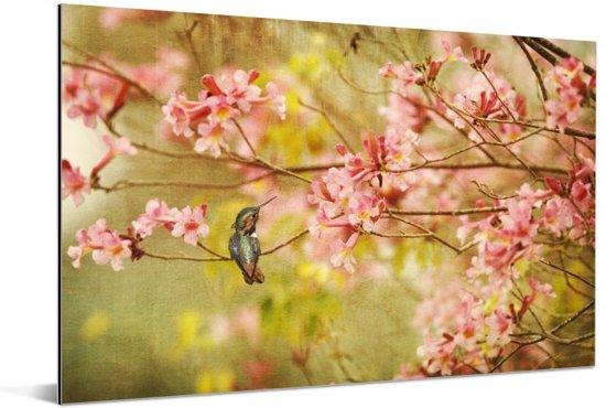 Kolibrie op een tak van een boom met de lente roze bloesems Aluminium 30x20 cm - klein - Foto print op Aluminium (metaal wanddecoratie)