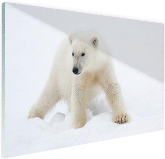 Ijsbeer in de sneeuw Glas 90x60 cm - Foto print op Glas (Plexiglas wanddecoratie)