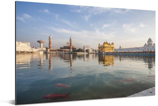 Rode vissen in het water bij de Gouden Tempel in India Aluminium 60x40 cm - Foto print op Aluminium (metaal wanddecoratie)