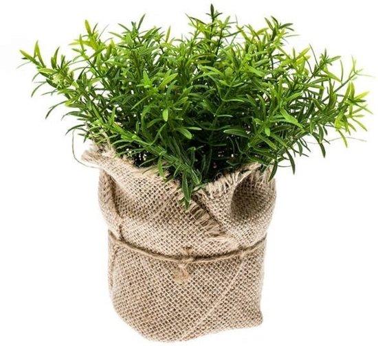 Kruiden In Pot.Kunstplant Tijm Kruiden Groen In Pot 16 Cm