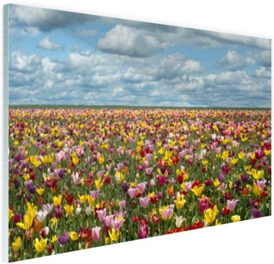 Tulpenvelden in Oregon Glas 60x40 cm - Foto print op Glas (Plexiglas wanddecoratie)
