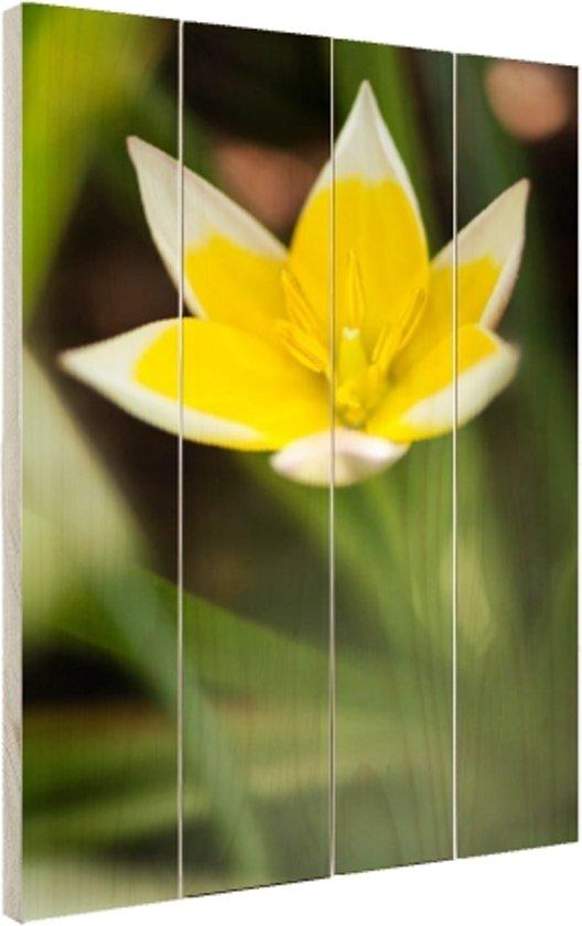 Gele bloem Hout 60x80 cm - Foto print op Hout (Wanddecoratie)