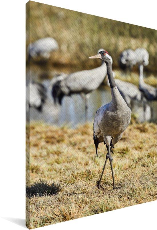 Europese kraanvogel poseert voor de camera Canvas 60x90 cm - Foto print op Canvas schilderij (Wanddecoratie woonkamer / slaapkamer)
