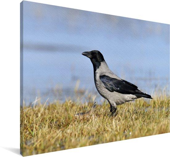 Bonte kraai op de grond in het gras Canvas 60x40 cm - Foto print op Canvas schilderij (Wanddecoratie woonkamer / slaapkamer)