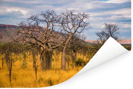 Een alleenstaande Afrikaanse baobab of Adansonia digitata in Australië Poster 120x80 cm - Foto print op Poster (wanddecoratie woonkamer / slaapkamer)