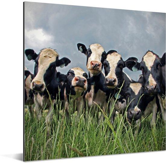 Grijze lucht boven de kudde Friese koeien Aluminium 20x20 cm - klein - Foto print op Aluminium (metaal wanddecoratie)