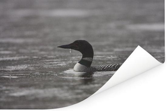 Zwart-wit beeld van een zwemmende parelduiker Poster 60x40 cm - Foto print op Poster (wanddecoratie woonkamer / slaapkamer)