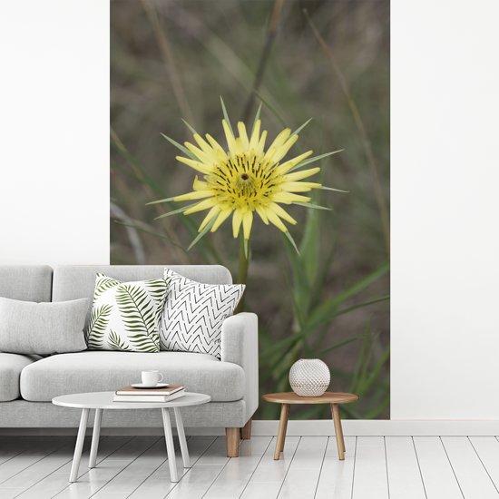 Fotobehang vinyl - Een gele morgenster in een groen grasveld breedte 160 cm x hoogte 240 cm - Foto print op behang (in 7 formaten beschikbaar)