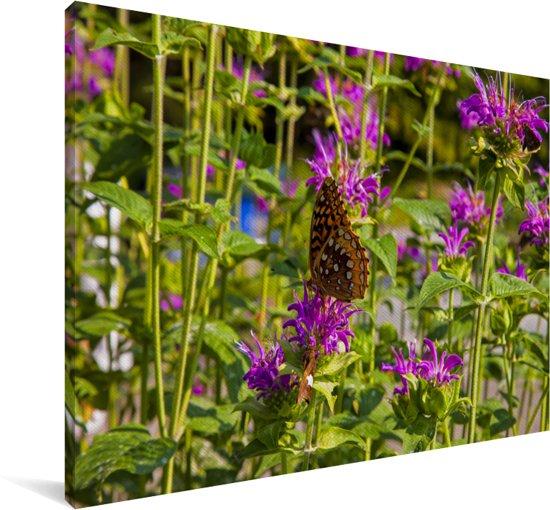 Een paarse bergamot tijdens een zonnige dag Canvas 120x80 cm - Foto print op Canvas schilderij (Wanddecoratie woonkamer / slaapkamer)
