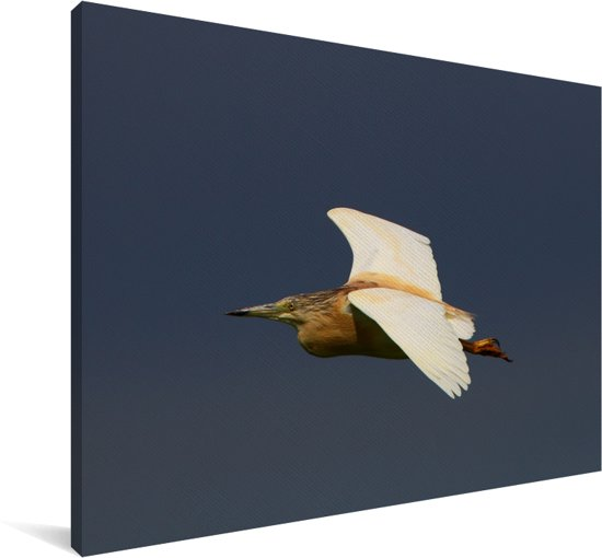 Ralreiger tijdens de vlucht Canvas 180x120 cm - Foto print op Canvas schilderij (Wanddecoratie woonkamer / slaapkamer) XXL / Groot formaat!