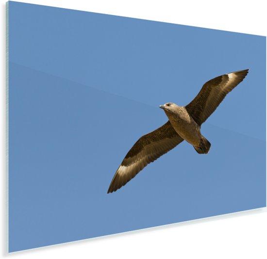 Volledig uitgespreide vleugels van een grote jager Plexiglas 90x60 cm - Foto print op Glas (Plexiglas wanddecoratie)