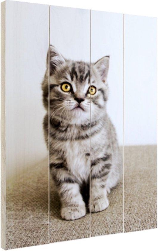 Grijze kitten met gele ogen Hout 40x60 cm - Foto print op Hout (Wanddecoratie)