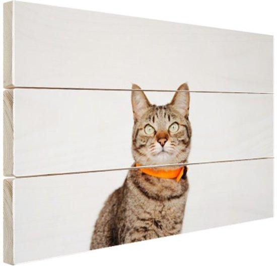 Kat met halsband Hout 30x20 cm - Foto print op Hout (Wanddecoratie)