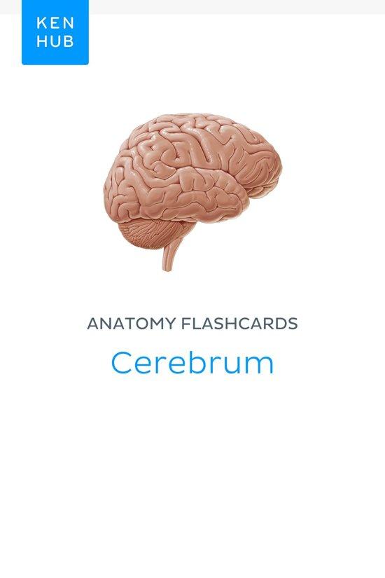 bol.com | Anatomy flashcards: Cerebrum (ebook), Kenhub ...