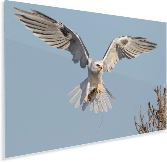 Witte valk vliegt naar een boom Plexiglas 60x40 cm - Foto print op Glas (Plexiglas wanddecoratie)