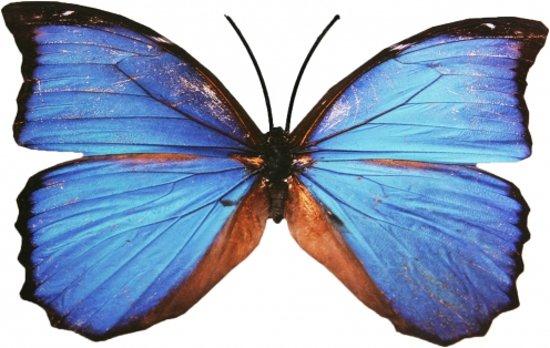 decoratie tuin vlinder blauw metaal 30 x 25 cm