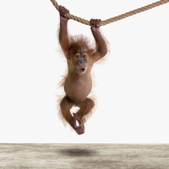 Baby orang oetan - Print op Vurenhout - 60x60 cm