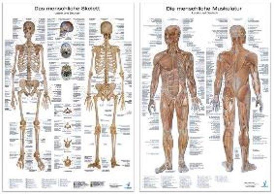 bol.com | Anatomie-Lehrtafeln im Doppelpack \' Die menschliche ...