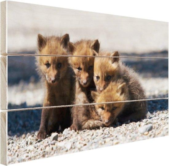 Vossenwelpjes op een weg Hout 120x80 cm - Foto print op Hout (Wanddecoratie)