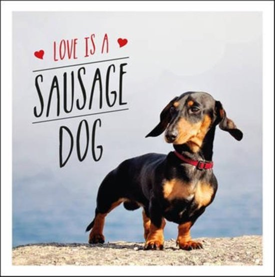Image of: Cutest Sausage Love Is Sausage Dog Bolcom Bolcom Love Is Sausage Dog Charlie Ellis 9781849539876 Boeken