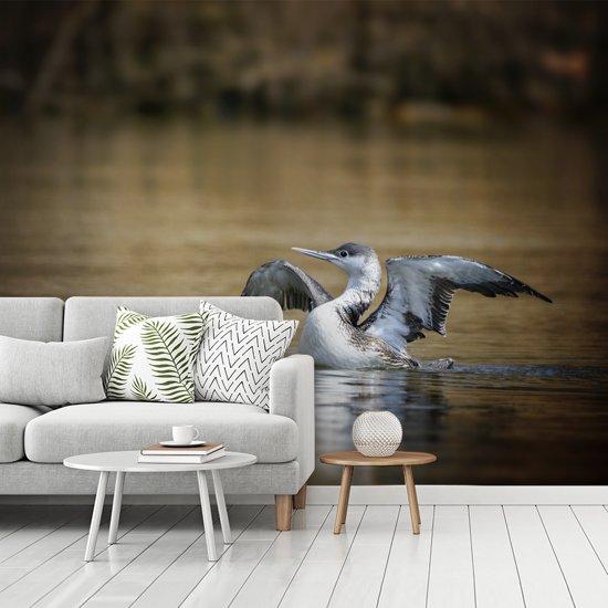 Fotobehang vinyl - Red-throated duiker in het bruine water breedte 340 cm x hoogte 270 cm - Foto print op behang (in 7 formaten beschikbaar)