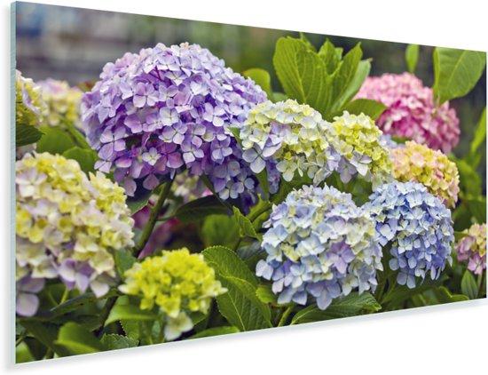 Verschillende hortensia bloemen Plexiglas 40x20 cm - Foto print op Glas (Plexiglas wanddecoratie)