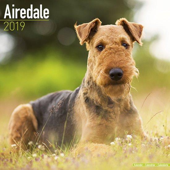 Airedale Terrier Kalender 2019