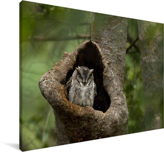 Wilde dwergooruil in zijn nest Canvas 60x40 cm - Foto print op Canvas schilderij (Wanddecoratie woonkamer / slaapkamer)