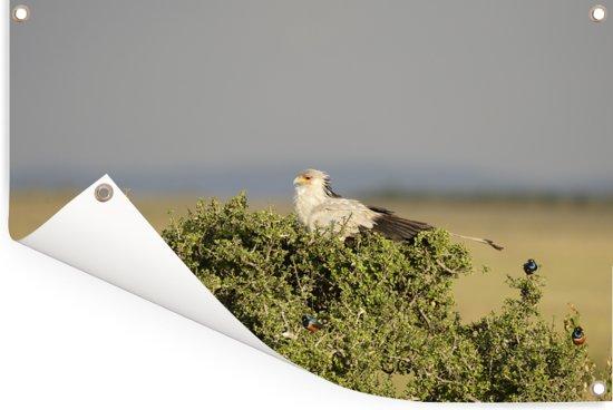 Secretarisvogel bevindt zich in het struikgewas Tuinposter 180x120 cm - Tuindoek / Buitencanvas / Schilderijen voor buiten (tuin decoratie) XXL / Groot formaat!