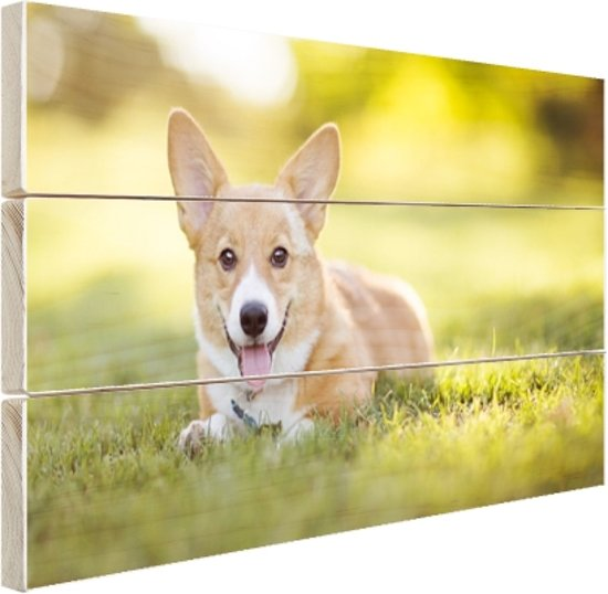 Welsh Corgi puppy Hout 30x20 cm - klein - Foto print op Hout (Wanddecoratie)