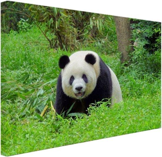 Grote panda in het gras Canvas 60x40 cm - Foto print op Canvas schilderij (Wanddecoratie)