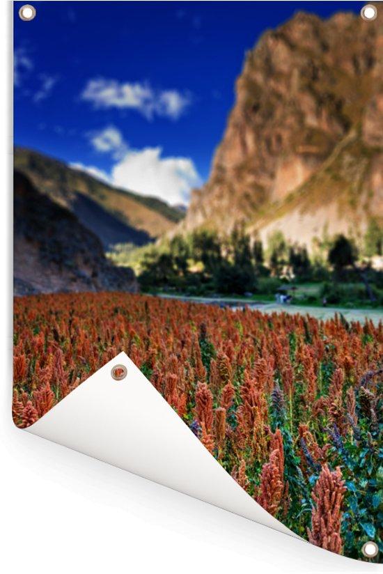 Rode quinoa planten onder de Pinkuylluna berg Tuinposter 60x90 cm - Tuindoek / Buitencanvas / Schilderijen voor buiten (tuin decoratie)