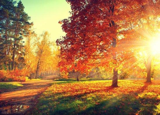 Papermoon Autumn Trees Vlies Fotobehang 300x223cm 6-Banen