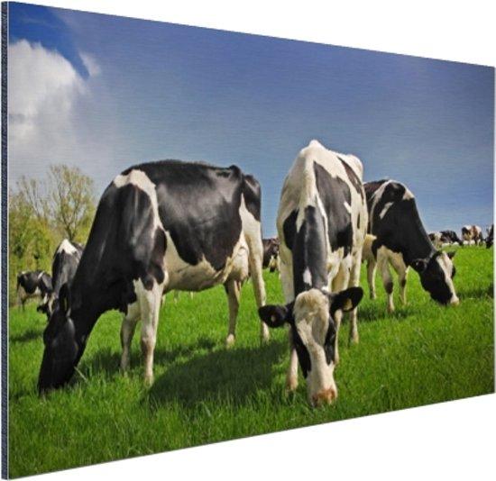 Kudde grazende koeien Aluminium 30x20 cm - Foto print op Aluminium (metaal wanddecoratie)