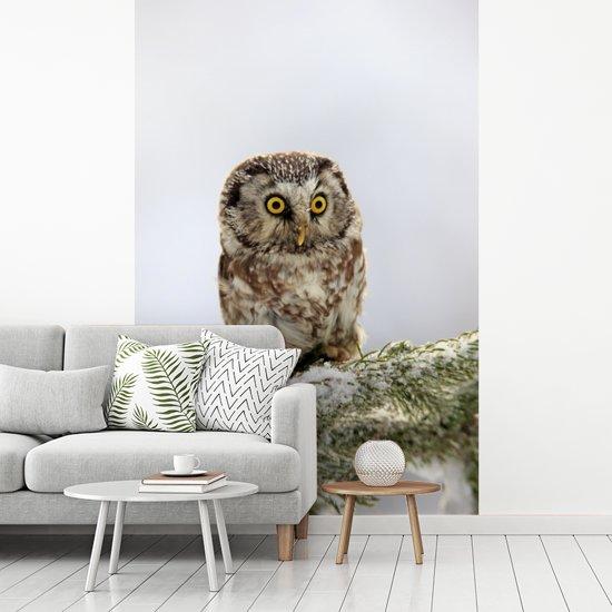 Fotobehang vinyl - Volwassen ruigpootuil op een besneeuwde boom in Tsjechië breedte 160 cm x hoogte 240 cm - Foto print op behang (in 7 formaten beschikbaar)