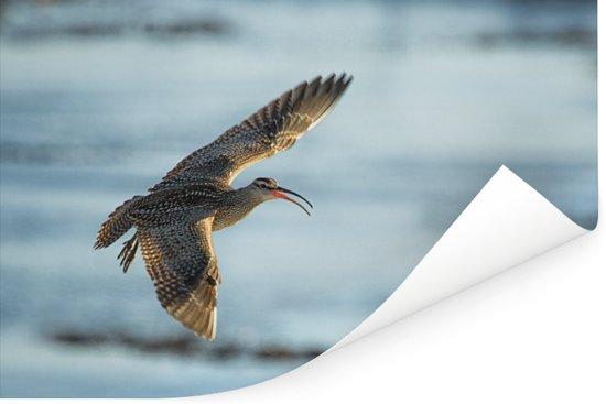 Een regenwulp vliegt over de stille oceaan Poster 180x120 cm - Foto print op Poster (wanddecoratie woonkamer / slaapkamer) XXL / Groot formaat!