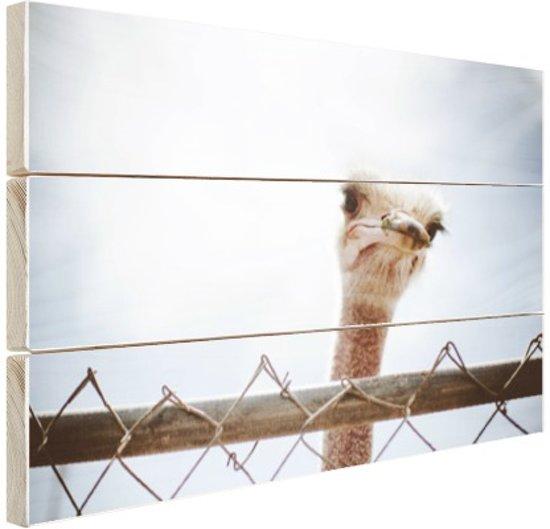 Struisvogel kijkt over hek Hout 60x40 cm - Foto print op Hout (Wanddecoratie)