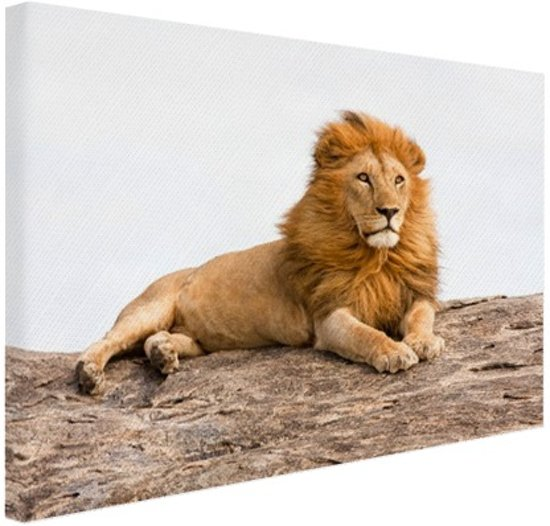 Liggende leeuw Canvas 120x80 cm - Foto print op Canvas schilderij (Wanddecoratie woonkamer / slaapkamer) / Dieren Canvas Schilderij