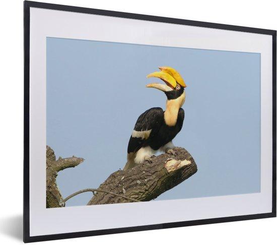 Foto in lijst - Dubbelhoornige neushoornvogel op een tak met een lichtblauwe achtergrond fotolijst zwart met witte passe-partout klein 40x30 cm - Poster in lijst (Wanddecoratie woonkamer / slaapkamer)