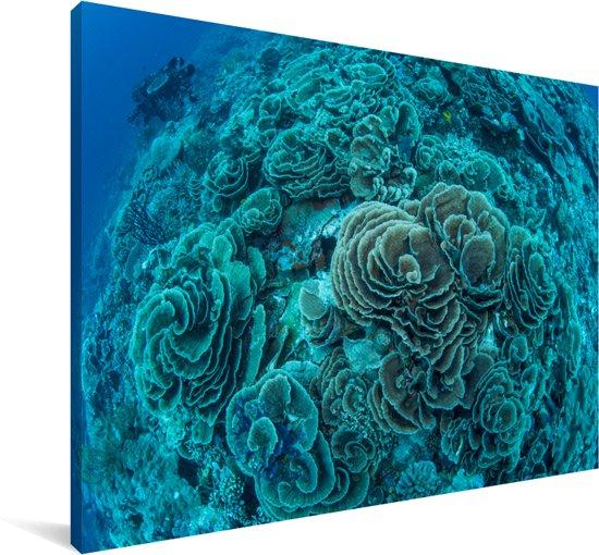 Sla-vormig koraal in het Maritiempark Wakatobi in Indonesië Canvas 60x40 cm - Foto print op Canvas schilderij (Wanddecoratie woonkamer / slaapkamer)