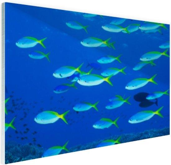 School van geelrugvissen Glas 30x20 cm - klein - Foto print op Glas (Plexiglas wanddecoratie)