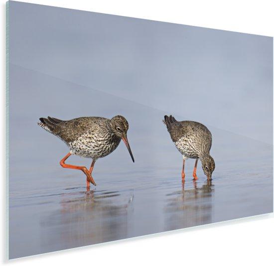 Twee tureluurs op zoek naar voedsel Plexiglas 30x20 cm - klein - Foto print op Glas (Plexiglas wanddecoratie)